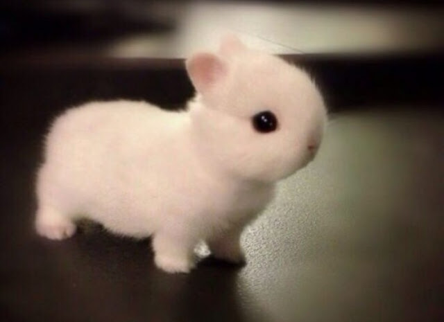 Stuff Toy Or Real Bunny ?