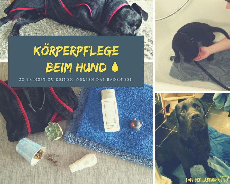 Fotocollage Körperpflege beim Hund Titel