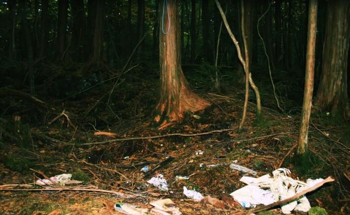 Hutan yang Menyeramkan