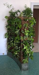 mur végétal bac sphaigne