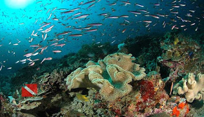 Bawah Laut Pulau Wayag