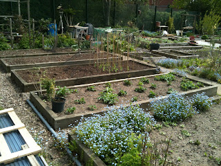 raised beds, gardening, life on pig row