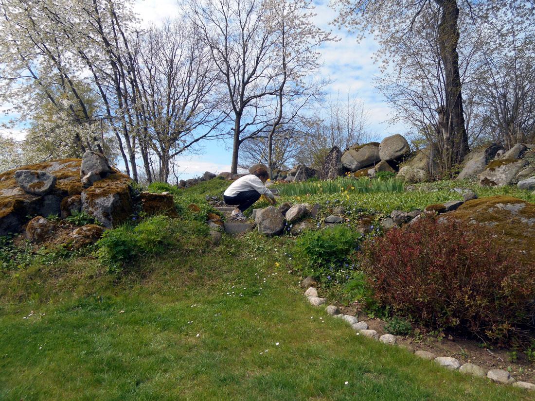 Oggi in giardino a strappare erbacce!