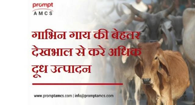 गाभिन गाय की बेहतर देखभाल से करे अधिक दूध उत्पादन