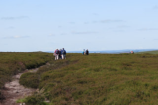 A group of walkers following a narrow path through the moorland heather.