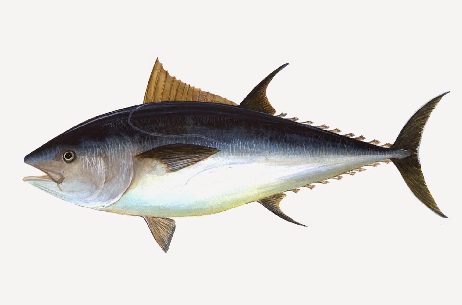 pescado omega 3 dieta vegetariana
