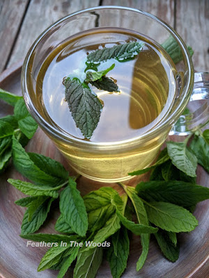 medicinal mint tea