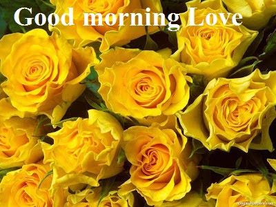 Good morning images and wishes for lover with yellow roses