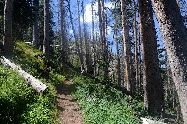 trail through the dead trees