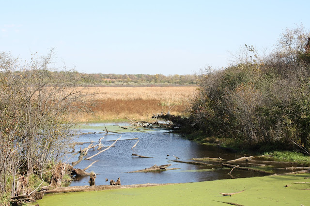 The wetlands at Volo Bog, the only quaking bog in Illinois.