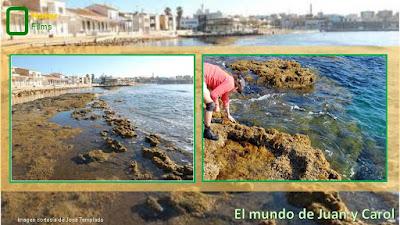 http://juanpuchefernandez.blogspot.com/2016/06/la-caracola-que-ayuda-de-la-erosion.html