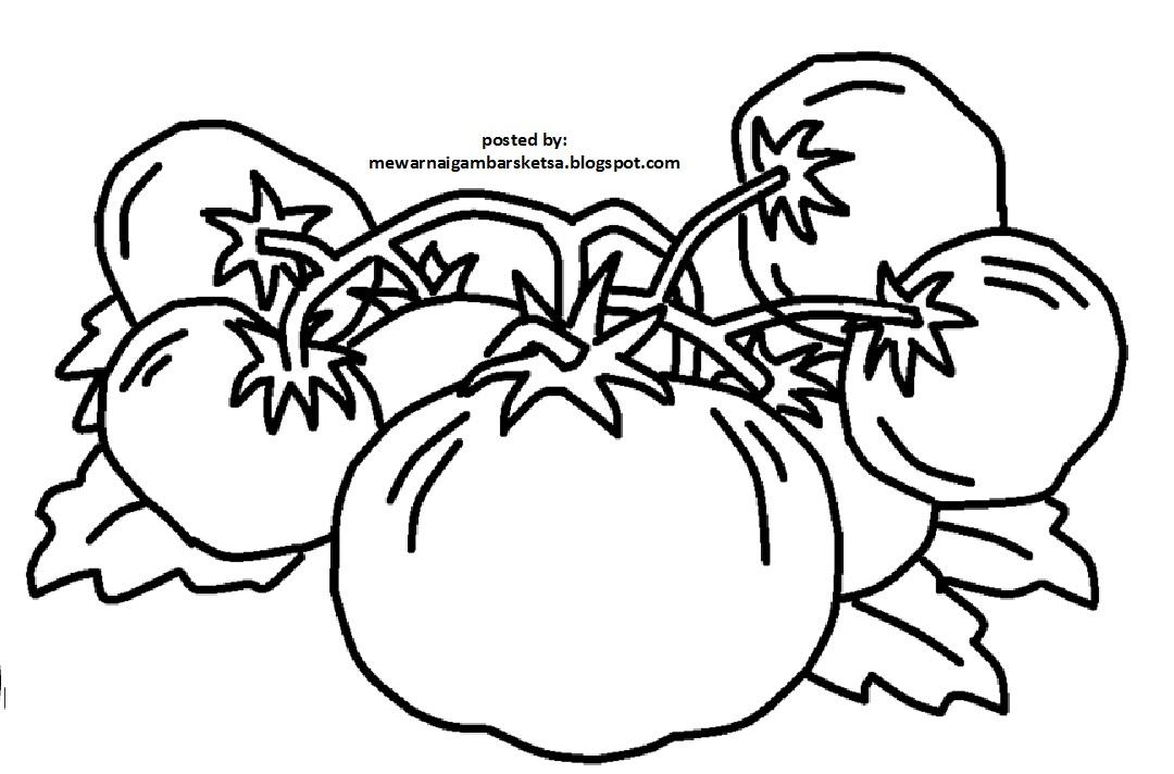 Mewarnai Gambarku Mewarnai Gambar Tomat
