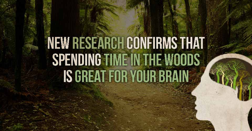 New Research Confirms That Spending Time In The Wood Is Great For Your Brain