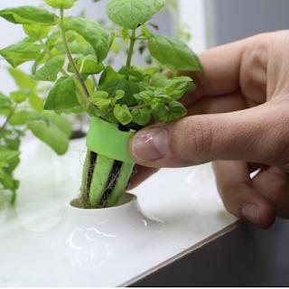 Un mini jardin d'intérieur connecté pour plantes aromatique