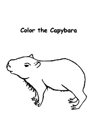 Coloring Pages Zoo Capybara