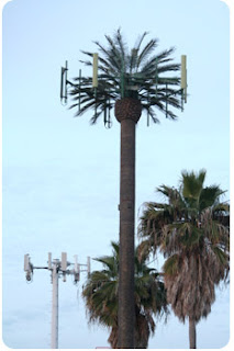 fake palm tree cell phone tower