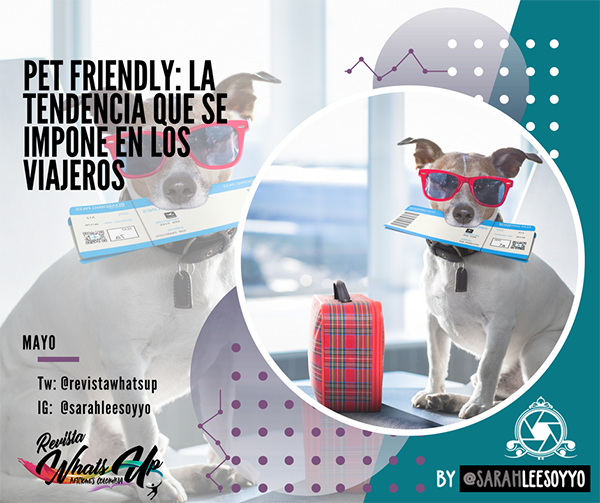 tendencias, Pet-friendly-viajeros-turismo-Almundo-mascotas-hoteles-destinos