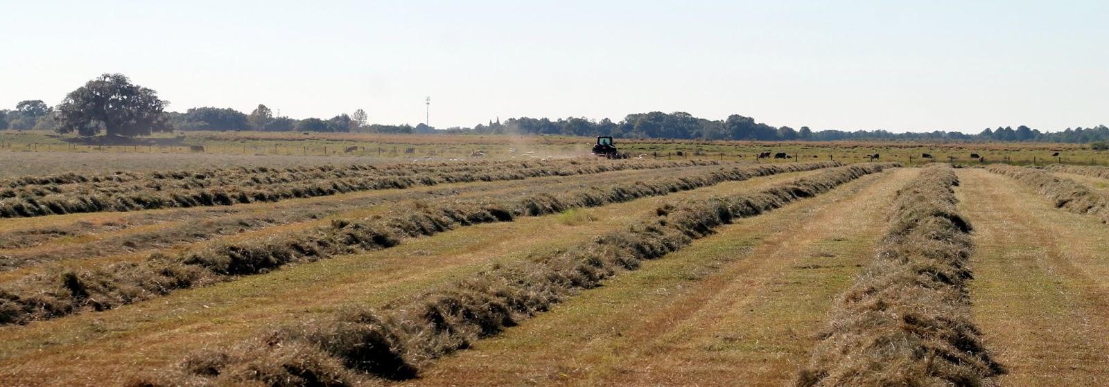 Tractor arando los campos