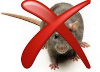 cara mengusir dan membasmi tikus