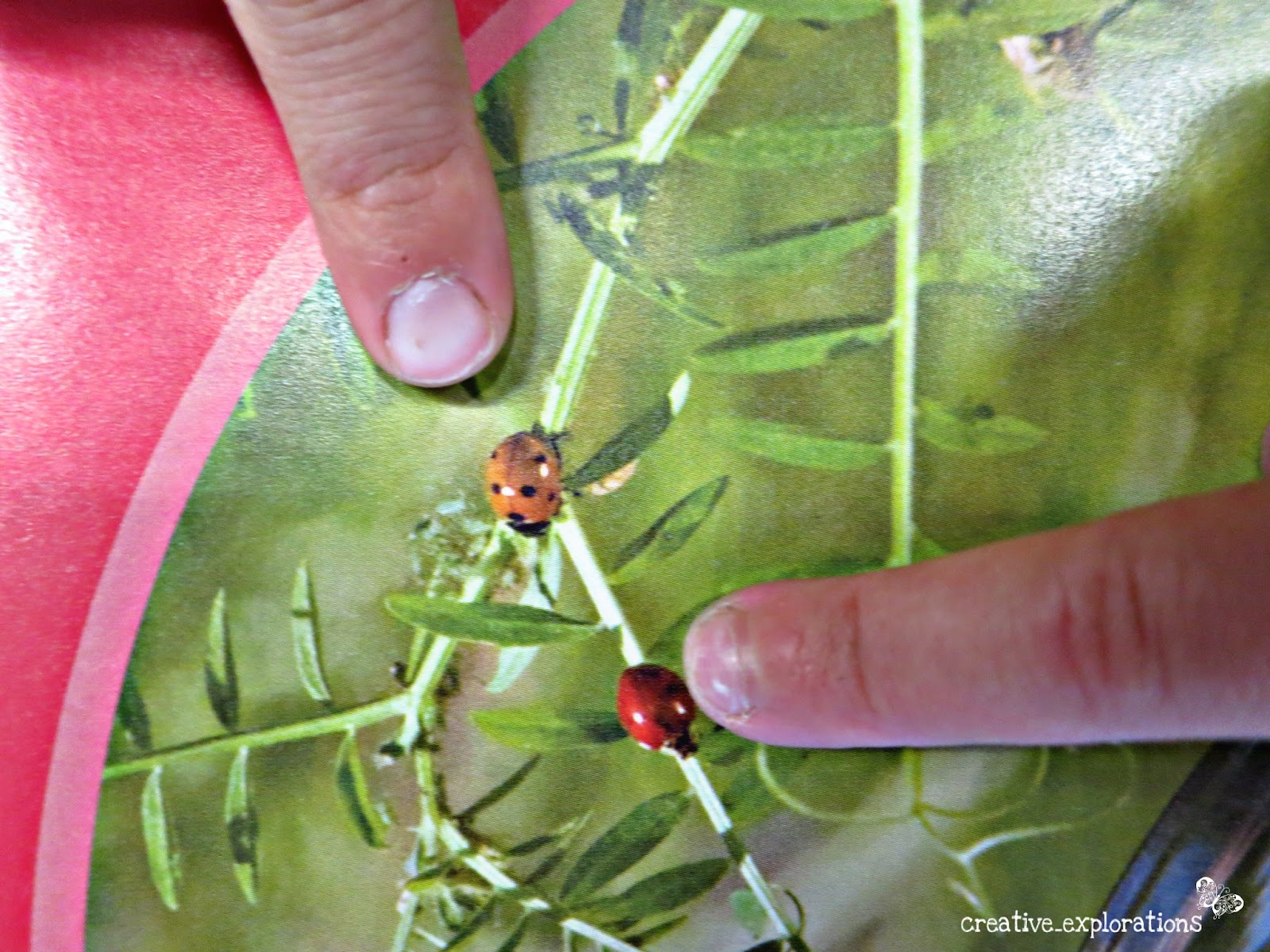 inquiry spaces and wondering places looking closely at ladybugs