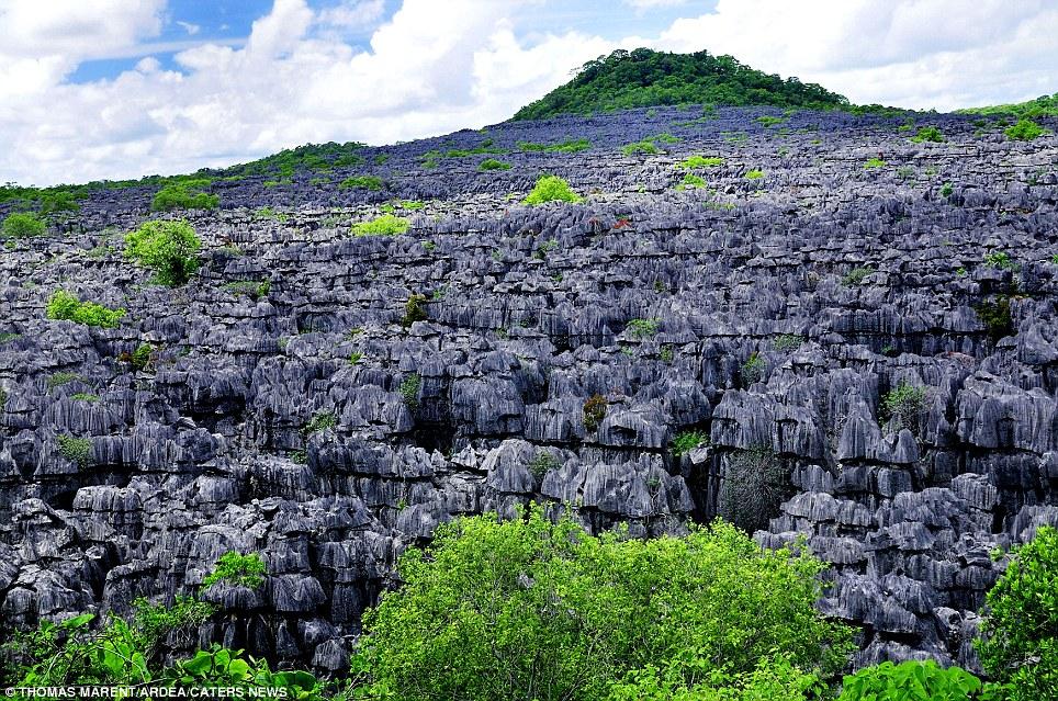 Tsingy: (Ankarana National Park, Northern Madagascar)