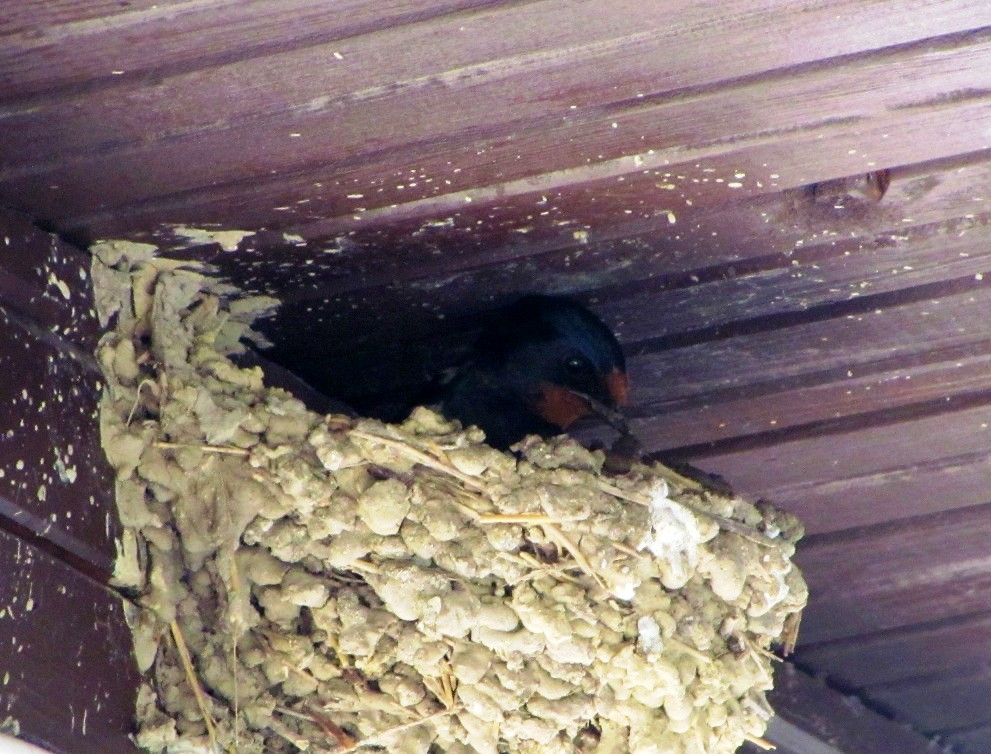Birding for a Lark: Woodland near Rogachevo