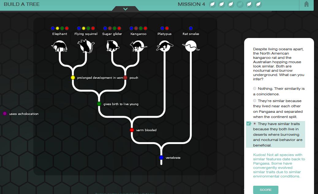 Phyloinformatics: Evolution game, NOVA Labs