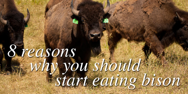 8 reasons why you should start eating bison