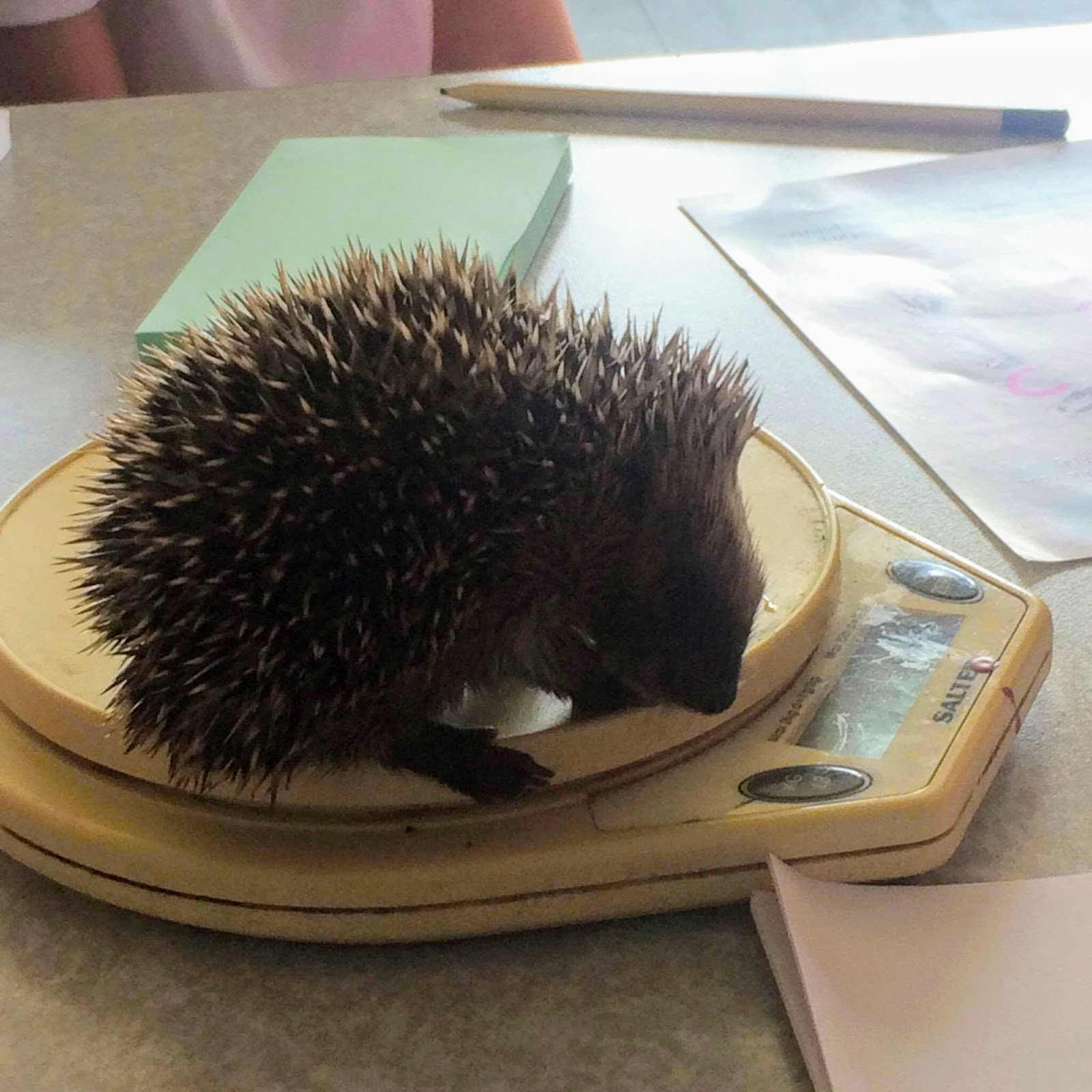 , Learning about Hedgehogs