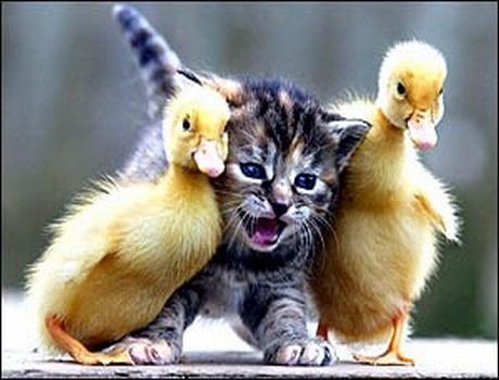 Happy And Cute Animals: Funny Baby Animals