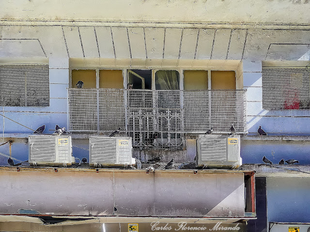 Balcon de un depto. copado por palomas.