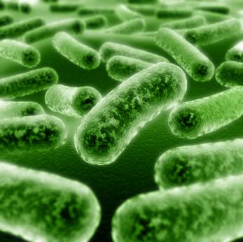 probioticos intestino irritable