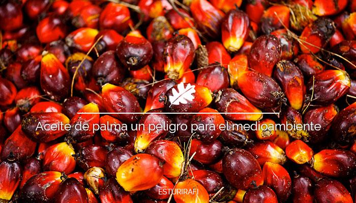 Aceite de palma, un peligro para la salud y el medio ambiente