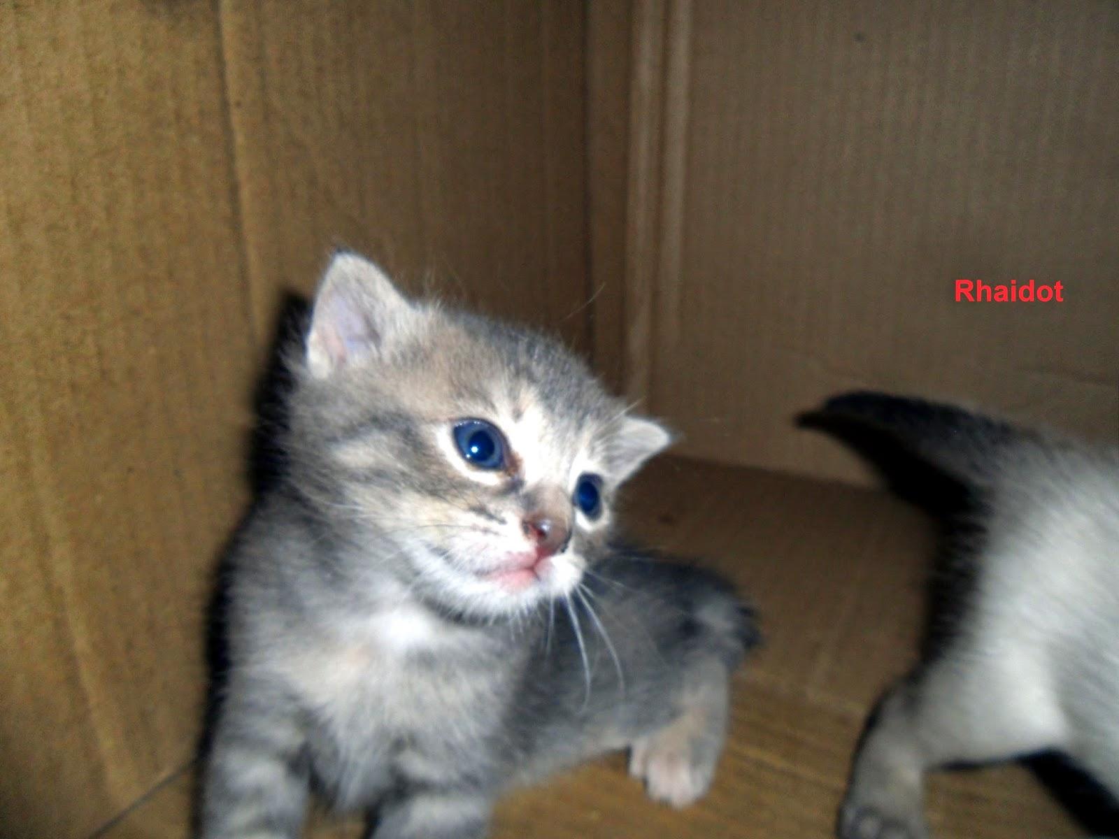 Bebe Gato Gris