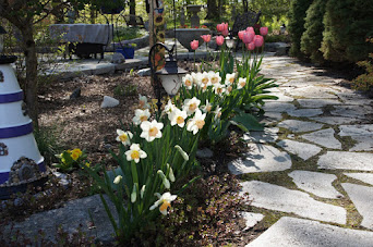 Tulips and Daffodils In My Garden
