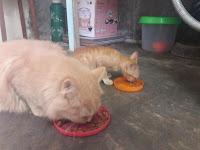 Kisah Nyata . Selama 20 Tahun Memberi Makan Ratusan Kucing