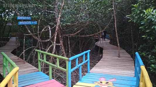 mangrove polaria desa mendalok