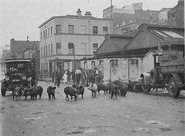 Twenty four pigs being driven along Day Street, Sydney, by a truck, ca. 1929 / Sam Hood. Notes: As odd as it may seem today, Sydney regularly had livestock in its streets. However, this example of a truck driving a herd of pigs along the Day Street waterfront towards Market Street is an anachronism, as the area for penning animals had become the City Council depot and the city livestock markets had moved 20km out of the city to Homebush.