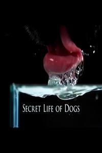 Watch Secret Life of Dogs Online Free in HD
