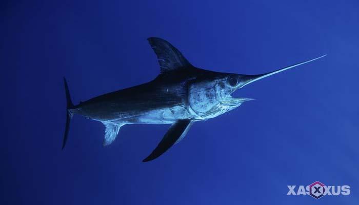 Makanan yang dilarang untuk ibu hamil - Ikan tinggi merkuri