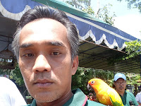 Sunconure Parakeet