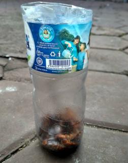 Cara Mudah Menjebak Kecoa