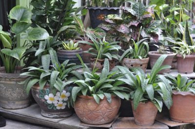 Best and Better Tips for Your Potted Plants to Enjoy Summer (Green Living) - A Web Blog about Procut Review, Blogging Tips, IT Technology Internet Tech Reviews