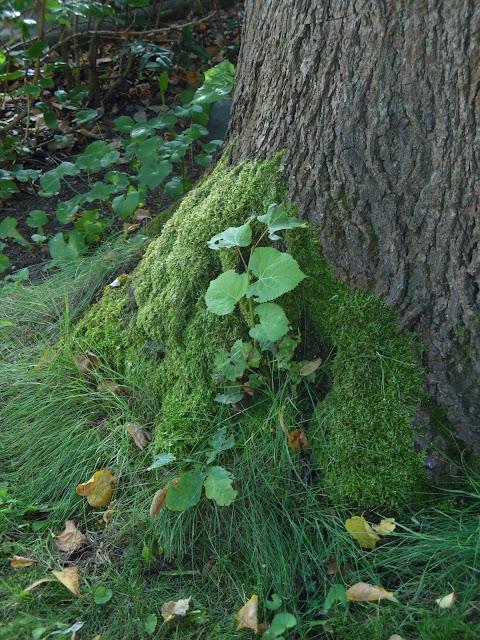 stare dzewa