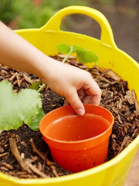 Como plantar abobrinha - Passo 4