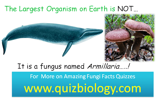 Quiz on Amazing Fungi facts