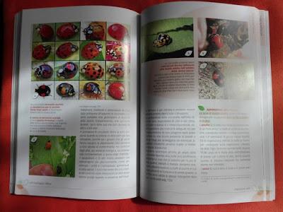 Proteggere l'orto con gli insetti utili: le coccinelle