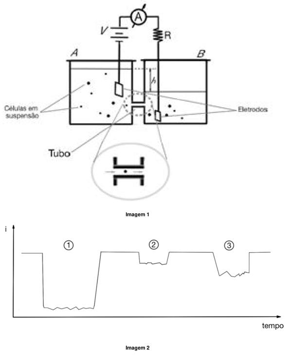 células em suspensão, eletrodos, tubo