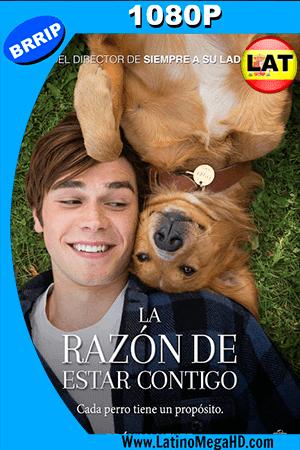La Razón de Estar Contigo (2017) Latino HD 1080P ()