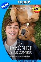 La Razón de Estar Contigo (2017) Latino HD 1080P - 2017
